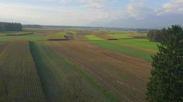 Antenna 4K: campo di grano e terra, autunno