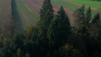 Antenna 4K: rivelare il campo di grano in autunno