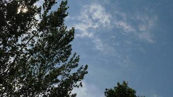 arbres dans la brise avec la lumière du soleil scintillant à travers les feuilles