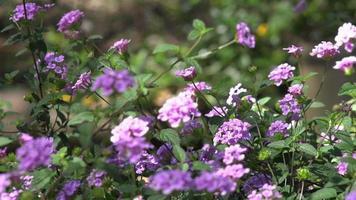 flores, jardim, flora, selvagem, plantas, verde, natureza, natural,