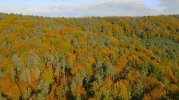 Antena 4k: visão total traseira acima das copas das árvores coloridas video