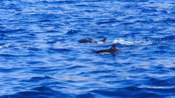 Dolphins jumping up out of the ocean