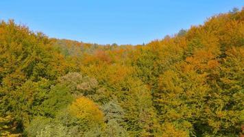 4k aérea: logo acima da copa das árvores coloridas no outono video