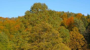 4k aéreo: revelan las copas de los árboles en otoño video
