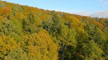 Antenna 4K: discendente sulle cime degli alberi in autunno