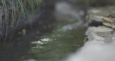 pequeño arroyo que fluye