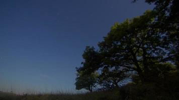 lapso de tempo noturno do controle deslizante motorizado com estrelas e nuvens em movimento, carvalho em primeiro plano