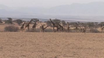 Turm der Giraffen