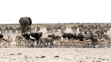 Wasserloch in Etosha mit vielen Tieren