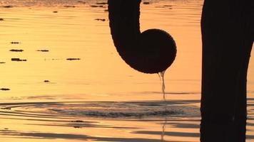 toro elefante in silhouette bere dal fiume al tramonto, delta dell'okavango