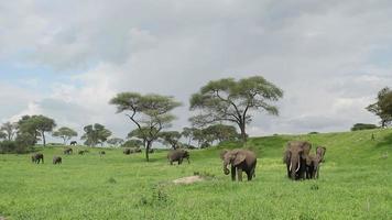 Elefanten in üppig grünen afrikanischen Ebenen.
