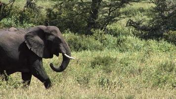 Herd of elephants walking in Serengeti National Park