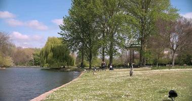 pássaros no lago com barcos no regent's park, londres na primavera