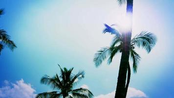 silhueta de palmeiras, reflexo de lente de sol, céu azul de ferro