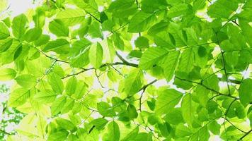 4k filmagens de folhas verdes balançando ao vento