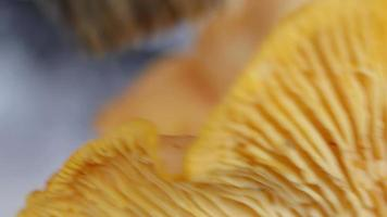 Handreinigung gelber Pilz mit Pinsel