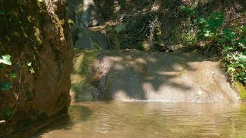 paisagem de floresta com riacho video