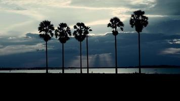 Silhouettes of palm trees at sunset video