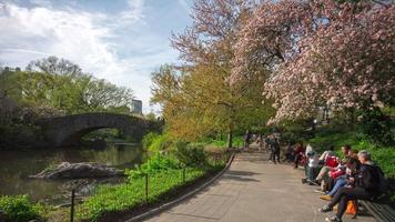 usa printemps temps central park arbres en fleurs route 4k time-lapse new york