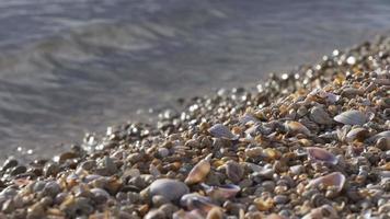 Usa seashell lake bay close up  4k florida video
