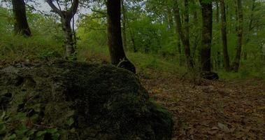 hdr forest time lapse shot cursore motorizzato. lasso di tempo della foresta, muschio sull'albero, priorità bassa della foresta di autunno di quercia. video