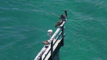eua verão dia miami gulf pass pelican place 4k florida video