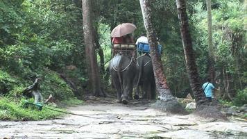 elefantes na selva (hd 1080) video