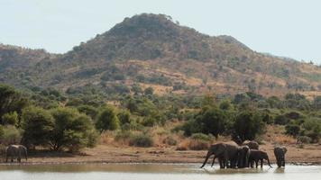 Elefanten trinken aus Wasserstelle