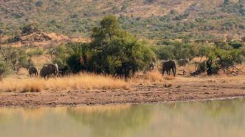 elefantes bebendo do bebedouro video