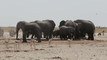 überfülltes Wasserloch mit Elefanten