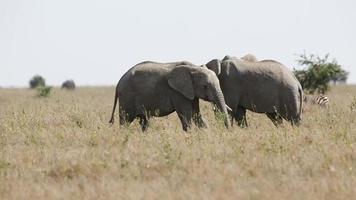 Elephants eating in Serengeti