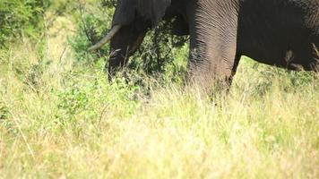 éléphant en hd sauvage