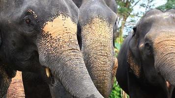 l'heure du repas pour l'éléphant