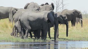 Herde afrikanischer Elefanten am Wasserloch