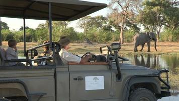 Los turistas en el vehículo Game Drive viendo un elefante, Botswana video