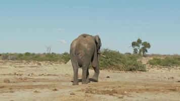Elefant geht weg