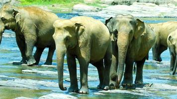 elefantes cruzando el río