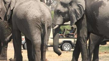 Tourists on safari vehicle looking at elephants video