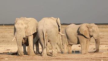 Afrikaanse olifanten bij waterput