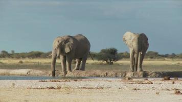 olifantenbad