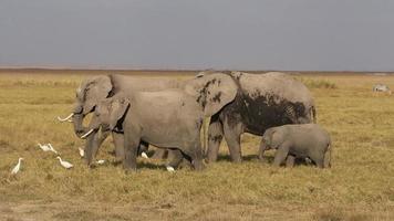 alimentacion de elefantes africanos video