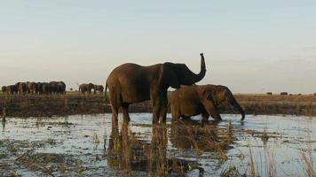 elefante con la proboscide tenuta alta