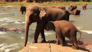rio de elefantes video