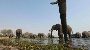 espectaculares imágenes de ángulo bajo de elefantes bebiendo en el abrevadero video