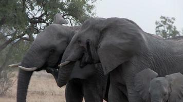 rassemblement d'éléphants