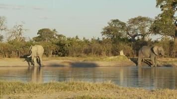 éléphants au coucher du soleil