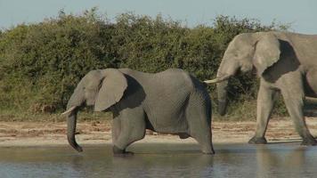 éléphants à un point d & # 39; eau