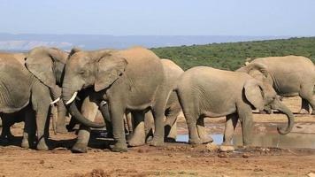 afrikanische Elefanten am Wasserloch