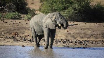 Elefant video