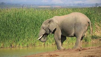 olifant drinkwater video